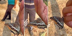 Orman Yangınından Kaçan Kelebeğin Bir Adamın Elinden Su İçtiği Anlar