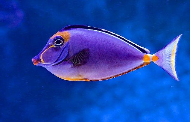 Duygusal balık!