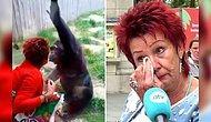 Sürekli Olarak Gittiği Hayvanat Bahçesinde Bir Maymunu Ziyaret Eden Kadın Hayvanat Bahçesinden Uzaklaştırıldı