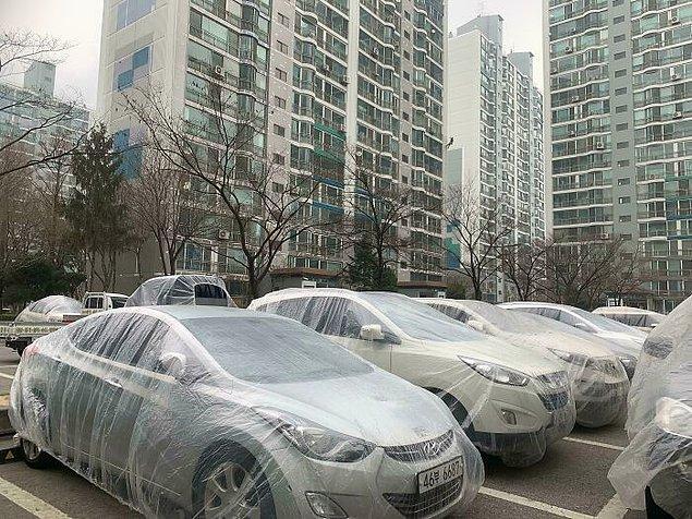 9. Güney Kore'de bir apartmanı boyayacak olan bu boyacılar, arabalara zarar gelmesin diye üstlerini örtmüş.