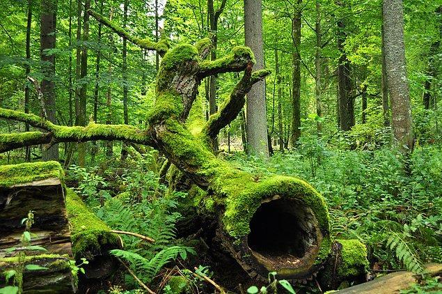 12. Ülkenin %30'u ormandır.
