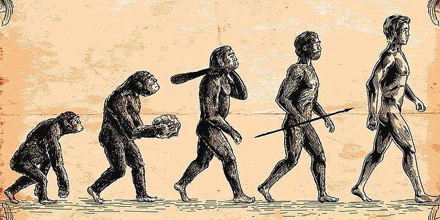 Evrim teorisi, bilim insanlarının %99'u tarafından doğru kabul edilmiştir ve sanılanın aksine insanların maymunlardan türediğini değil, tüm canlıların birbiriyle bağlantılı olduğunu söyler.