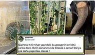 Hayvanat Bahçesindeki Canlıların İçler Acısı Hallerini Gösteren Paylaşımlar Sosyal Medya Gündeminde