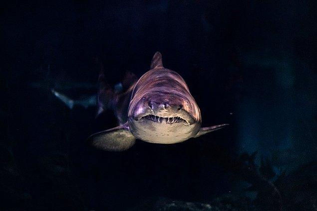 5. Köpek balıkları ağaçlardan daha önce oluşmuştur. Ağaçlar 350 milyon yıl önce ortaya çıkmışken köpek balıkları 400 milyon yıl önce ortaya çıkmıştır.