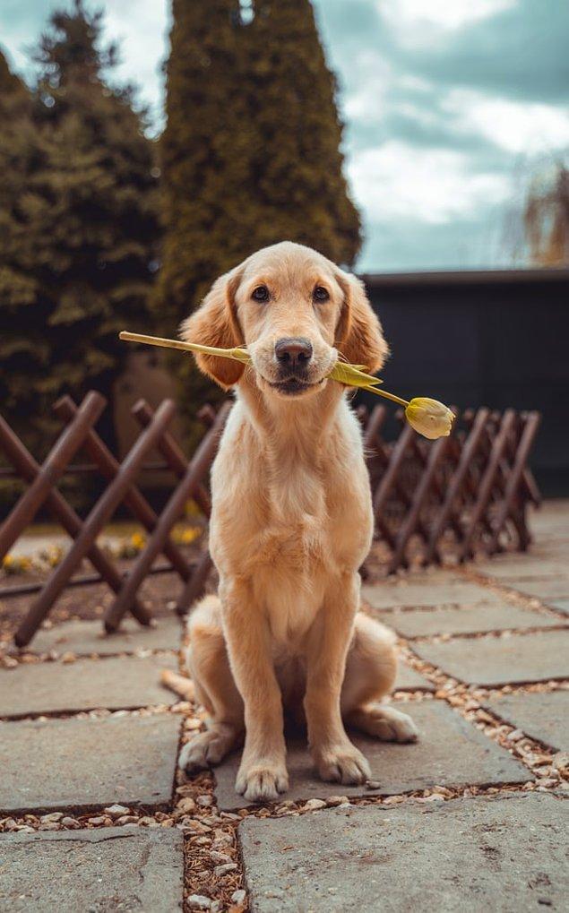 13. Köpek sahiplenmek ölüm ihtimalinizi %24 oranında azaltır.