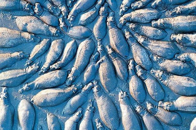 8. Yukarıdan Su Aygırı Grubu - Talib Almarri (Vahşi Yaşam Kategorisinde Yüksek Övgüye Değer Ödülü)