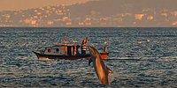 Ekrem İmamoğlu, 'Boğaz Bugün Yunuslarla Güzelleşti' Diyerek İstanbul Boğazı'ndaki Yunusları Paylaştı