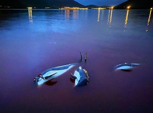 Ülkede daha önceki en büyük yunus avı, 1200 yunusla 1940 yılında kaydedildi.