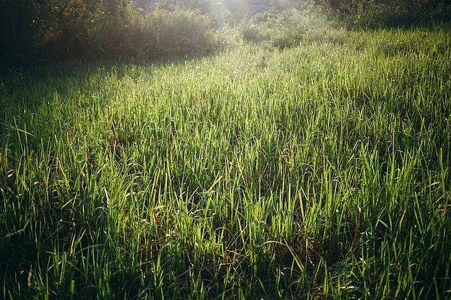 Annesinin bahçesinin çimlerini biçen bir adam bir anda inanılmaz keskin bir koku almaya başladı.