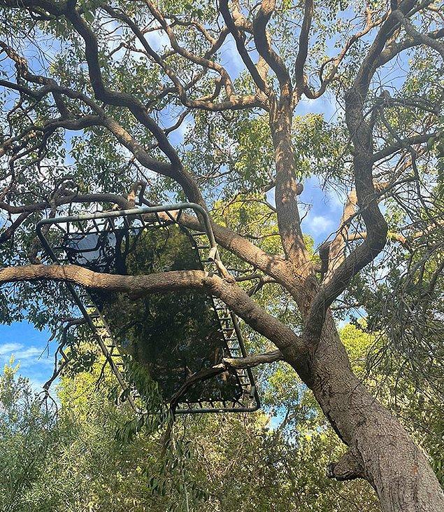 """14. """"Dün akşam komşum parti verdi, ağacın üstündeki trambolin benim."""""""