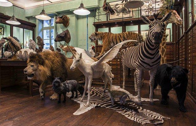 13. Paris'te bulunan Mumyalanmış Hayvan Pazarı Deyrolle