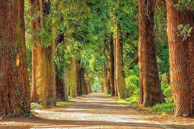Hepimiz birer orman kuramayız belki ama bireysel olarak neler yapabiliriz, hepimiz için derledim: