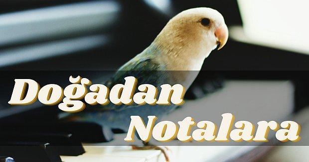 Müzik İlham Almaktır! Doğanın Müzisyenleri Kuşlardan Esinlenilmiş 12 Eser