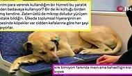 Yağmurdan Kaçıp Tramvaya Sığınan Köpeğin Akbil Basmadığı İçin İnsanların Hakkını Yediğini Söyleyen İlginç Adam