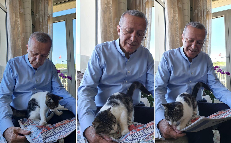 Cumhurbaşkanı Erdoğan 'Pıt Pıt Şeker' ile Fotoğraflarını Paylaştı: 'Güncel Gelişmelere Pek Meraklı'