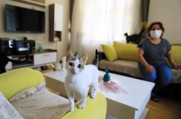 Emekli Maaşından Sadece 25 TL Kalıyor: Bütün Parasını Sokak Kedilerine Harcayan Kadın İcralık Oldu