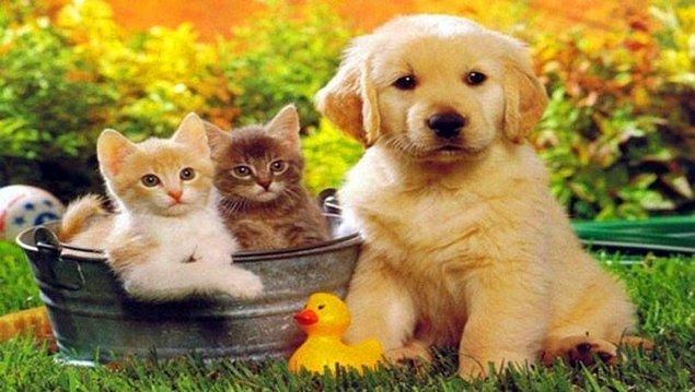 Farkındalık Yaratacak Hayvanları Koruma Günü Sözleri