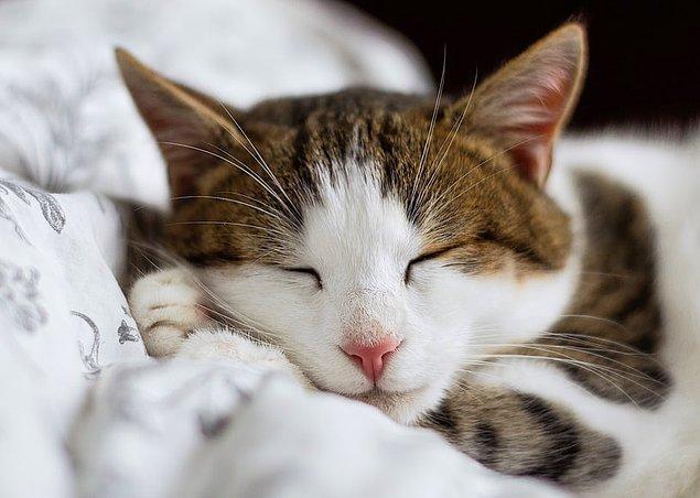 """4. Kedileri çok seven insanlara """"Ailurophile"""" denir. Ayrıca kedilerden nefret eden insanlara ise """"Ailurophobic"""" denir."""