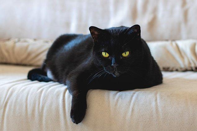 13. Almanya'da eğer bir siyah kedi soldan sağa doğru yürürse uğursuz olduğuna, sağdan sola doğru yürürse şans getirdiğine inanılır.