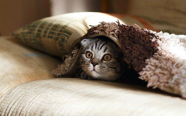 23. Uzmanlar tarafından kedilerin neden miyavladıkları halen kesin olarak bilinmemektedir.