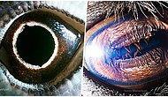 Görünce Hayran Kalacağınız Çeşitli Hayvan Gözlerinin Yakın Çekim 30 Fotoğrafı