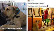 İstanbul'u Turlayan Köpek Boji'nin Hesabından İçinizi Isıtacak Paylaşımlar