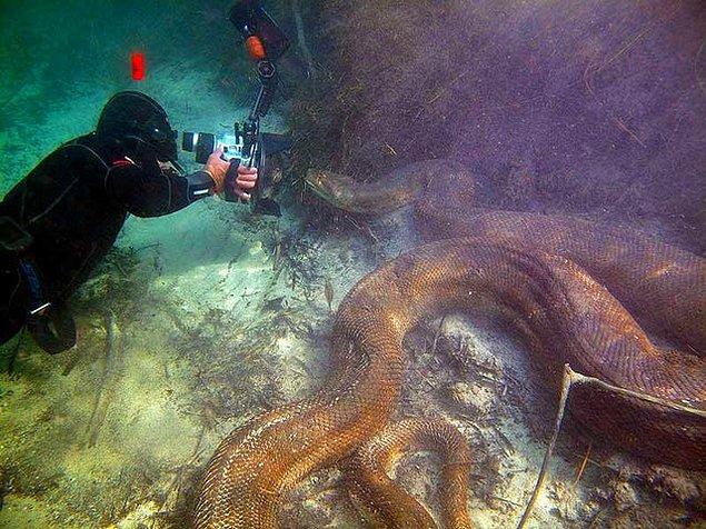 8. Denizin altında görülen devasa bir anakonda: