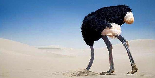 6. Kafasını kuma gömen deve kuşları