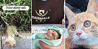 Ölmek Üzere Olan Yavru Kediyi Sağlığına Kavuşturup Büyüten Güzel İnsanlar