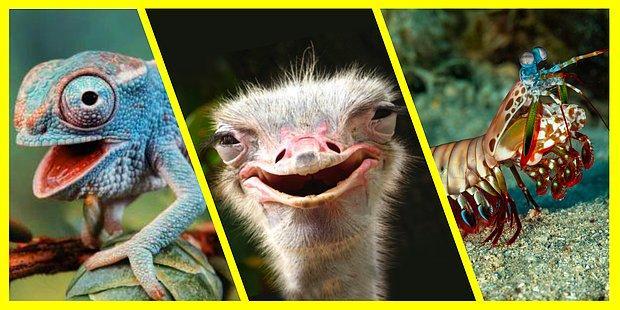 Gözleriyle Şaşkına Çeviren 10 İlginç Hayvan Türü