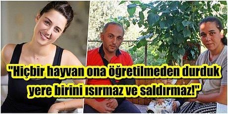 Melis Birkan, Bir Çocuğun Yanağını ve Kulağını Kopartan 'Pitbull Vahşeti' Haberlerine Tepki Gösterdi