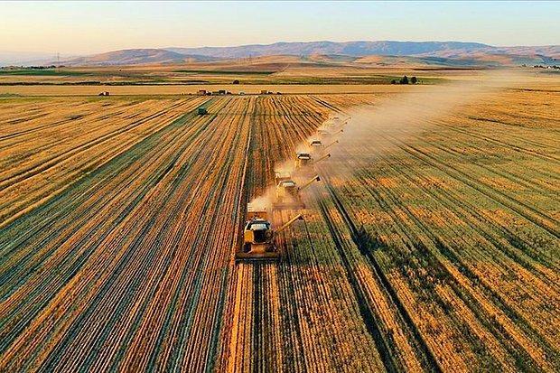 TÜİK Raporu: Bitkisel Ürünler ve Sebze Üretimi Geçen Yıla Göre Azalacak