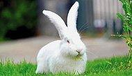 Tavşan Nasıl Yıkanır? Tavşan Nasıl Temizlenir?